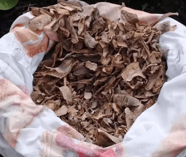 Мешок с картофельной шелухой для приготовления питательной подкормки