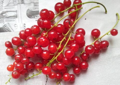 Грозди красной смородины сорта Валентиновка на белом фоне